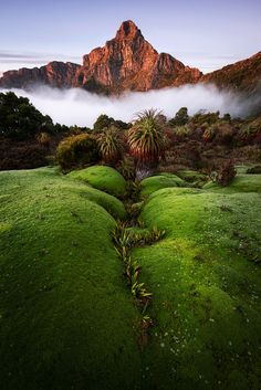 Radiant Anne by Chris Wiewiora on 500px,South-West National Park,Tasmania