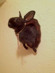 Taxidermy Black Rabbit Shoulder Mount by LepusLapin All My Friends Are Dead, Vulture, Memento Mori, Angel Wings, Taxidermy, Fossils, Scary, Rabbit, Two By Two