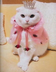 Queen Kitty - I wonder if my kitty would let me dress her like this and take a photo?