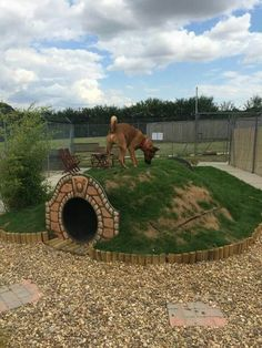 My dog would this  tunnel in our backyard