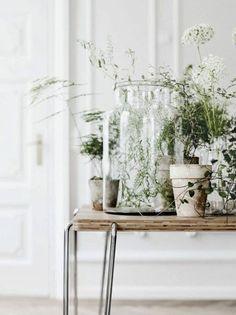 Plants. #pourchezmoi