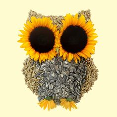 Image discovered by Design Pine. Find images and videos about owl, sunflower and seeds on We Heart It - the app to get lost in what you love. Sunflower Quotes, Sunflower Pictures, Sunflower Art, Sunflower Seeds, Happy Flowers, Beautiful Flowers, Sunflowers And Daisies, Sunflower Wallpaper, Owl Print