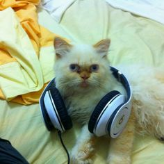 Reaction of my cat 2 days ago when he heard my new track. So funny:)