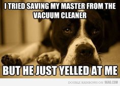 P is always trying to save me frm the  vac cleaner, the broom, shark, swifter, basically anything on the floor!