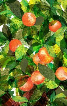 Pomegranate tree illustration by Jennifer Maravillas