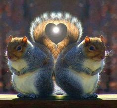 """""""Heart"""" made with squirrel tails"""