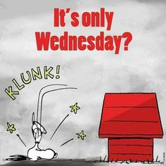 It's only wednesday snoopy wednesday hump day wednesday quotes happy wednesday wednesday quote Wednesday Hump Day, Happy Wednesday Quotes, Wednesday Humor, Happy Quotes, Funny Quotes, Tuesday Morning, Happy Tuesday, Thursday, Charlie Brown Quotes
