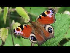 Butterflies, Moths & Damselflies