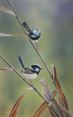 peta boyce birds australian artist - The world's most private search engine Small Birds, Little Birds, Colorful Birds, Pretty Birds, Beautiful Birds, Animals Beautiful, Australian Birds, Australian Artists, Rare Animals