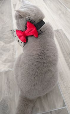 Cat Bow Tie Collar Velvet and Tulle Dog Bow tie Pet Bow Tie ideal for formal occasions by PinkBau