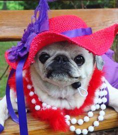 Old lady dog costume cute animals halloween crafts diy costumes costume ideas dog costumes pet costume ideas