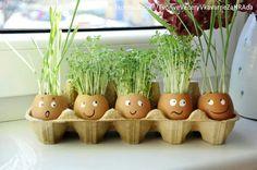 Diy And Crafts, Cactus, Planter Pots, Decoration, Egg Box Craft, Decor, Decorations, Decorating, Dekoration