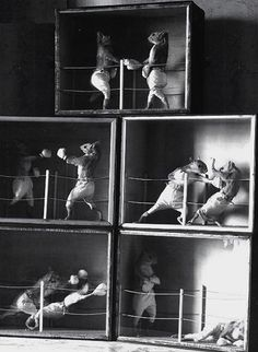 Perhaps one of the most iconic taxidermy cases of the victorian period Pugilists by Edward Hart. These are Red Squirrels in anthropomorphic poses.