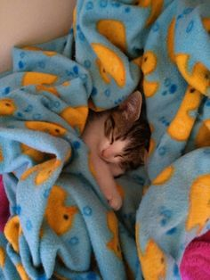 Sink in. | 19 Cats Looking So Cozy That It Will Finally Bring You Peace