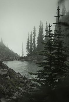 45 Super Ideas for nature forest mountains travel adventure life Forest Mountain, Foggy Forest, Misty Forest, Forest Art, Tree Forest, Mountain Tattoo, Belle Photo, The Great Outdoors, Mother Nature
