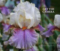 Iris GET THE CAMERA | Stout Gardens at Dancingtree