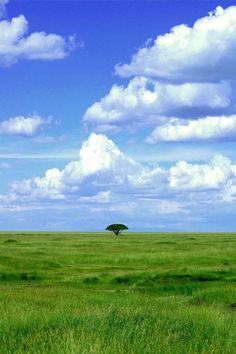 The Serengeti