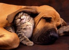 Tough Love: Dogs That Fell In Love With Cats, Even If The Cat Didn't Seem So Thrilled - World's largest collection of cat memes and other animals Funny Animal Pictures, Funny Animals, Cute Animals, Animals Images, Funny Photos, Cute Puppies, Cute Dogs, Dogs And Puppies, Cute Kittens