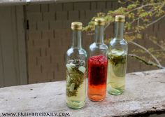 Your new go-to blueprint for homemade herbal culinary vinegars | Fresh Bites Daily