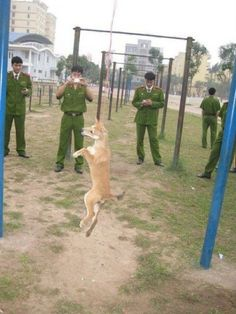 A group of Vietnamese police officers were spotted inhumanely destroying an innocent dog by hanging. The men hanged the innocent animal and then stopped to take. Cruel People, Stupid People, Stop Animal Cruelty, Dog Fighting, Animal Welfare, Horror, Animal Rights, Police Officer, Animals Beautiful