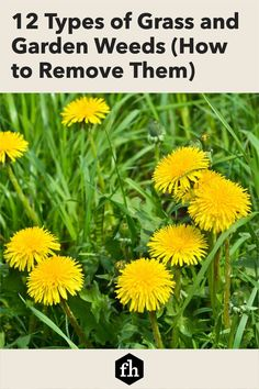 12 Types of Grass and Garden Weeds (How to Remove Them)