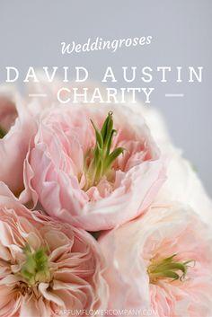 Charity from the David Austin Wedding Collection #luxuryroses #weddinginspiration #parfumflowercompany