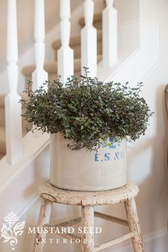 training rosemary topiaries & other garden things - Miss Mustard Seed Farmhouse Style Kitchen, Modern Farmhouse Kitchens, Farmhouse Decor, Country Farmhouse, Farmhouse Table, French Country, House Plants Decor, Plant Decor, Bedroom Vintage