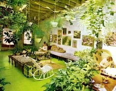 It's A Jungle In There: Invasion of the 1970s Houseplants | Go Retro!