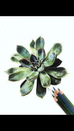 Colored Pencil Artwork, Color Pencil Art, Colored Pencils, Pencil Drawings Of Flowers, Botanical Drawings, Botanical Art, Pencil Art For Beginners, Polychromos, Succulents Drawing