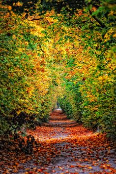 I ♥ autumn Central Europe, Bratislava, Solo Travel, Natural World, Best Part Of Me, Mother Nature, Paths, Beautiful Places, Scenery