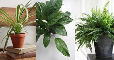 Quelques plantes vertes faciles - Mango and Salt Mango Salt, Deco, Cactus Plants, Planting Flowers, Articles, Action, Victoria, Gardening, Lawn And Garden