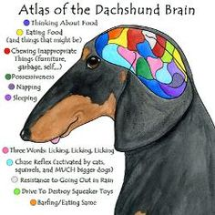 Atlas of the Dachshud Brain by Terry Pond