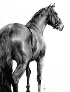 His majesty by define-x on deviantart sketches horse drawing Pencil Portrait Drawing, Pop Art Drawing, Sketch Painting, Horse Drawings, Animal Drawings, Art Drawings, Horse Anatomy, Art Optical, Bulldog