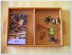Insekter och bildkort