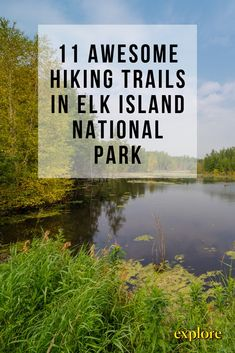11 Awesome Hiking Trails in Elk Island National Park Hiking Photography, Wildlife Photography, Animal Photography, Best Places To Travel, Places To See, Alberta Travel, Tiger Cubs, Tiger Tiger, Bengal Tiger