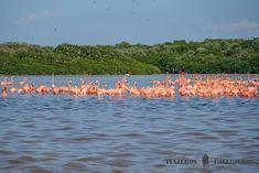 Hoy es el primer día del año y el día que haremos el Tour Celestún en Yucatán, en el que podremos vernos rodeados de flamencos y adentrarnos en un manglar.