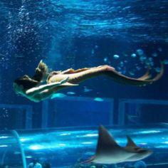"""Em """"A Força do Querer"""", Ritinha aceita trabalhar como sereia em aquário - 14/06/2017 - UOL TV e Famosos"""