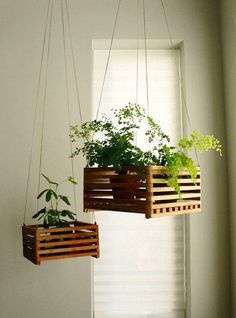 Small potted plants in a hanging basket