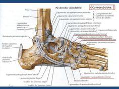 anatomia del pie ligamentos - Buscar con Google