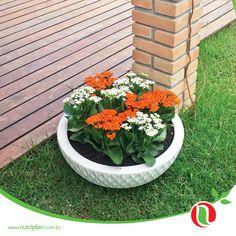 Os vasos da Nutriplan destacam as flores, trazendo inovação, beleza e sofisticação! #Nutriplan