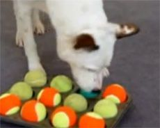 Cheap and totally awesome homemade dog toys and games to keep your four legged love busy and active!   #dogs #dogtoys #doggames