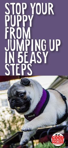 The puppy training tips are here to help you stop your puppy from jumping up, whether it's jumping on people, jumping on the couch, the bed or other furniture, or jumping up on walks, these dog training tips will help you with your new puppy. #puppy #puppies #dogtraining
