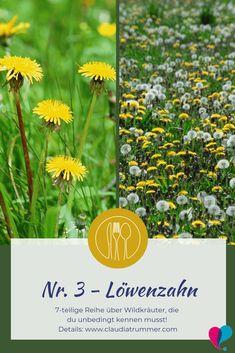 7 Wildkräuter, die du kennen musst - Löwenzahn Hydroponic Gardening, Hydroponics, Teeth Whitening Procedure, Taraxacum Officinale, Growing Lettuce, Dog Pen, Teeth Bleaching, Diy Projects For Beginners, Nursing Jobs