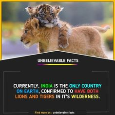 Wierd Facts, Real Facts, Wtf Fun Facts, Funny Facts, True Interesting Facts, Interesting Facts About World, Intresting Facts, Animal Facts For Kids, Fun Facts About Animals
