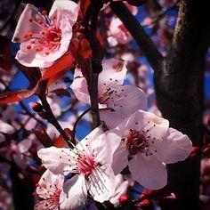 【photographic.essence】さんのInstagramをピンしています。 《Spring is coming 🌸🌧☀️ #iPhone6 #camera #cherryblossoms #spring #seasons #canon #canonrebel #rebelT6i #T6i #eos #eosphotography #canonphotography #photography #kodakmoment #canonmoment #lense #zoom #art #passion #essencephotography #essencephoto》