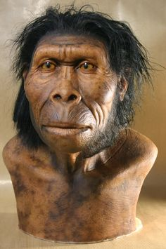 Homo habilis - reconstruction Mais Homo Habilis, Theory Of Evolution, Human Evolution, Forensic Facial Reconstruction, Human Fossils, Prehistoric Man, First Humans, Ancient Civilizations, People Around The World