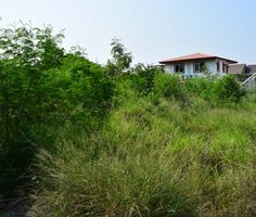 Land For Sale Near Cha-am Beach - Thailand Real Estate 1-0-90 Rai (1,960 M²) Land Plot 225 M from Cha-am Beach - Thailand Real Estate