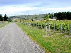 There's something quite romantic about a wine region whose every hill bears a name given long ago, and whose byways and thoroughfares are often labeled in the same tongue, describing where they will take you or the quality of the journey you'll have along the way.    Just outside of the quaint little Victorian farming community of Martinborough, New Zealand the roads quickly devolve to country roads...