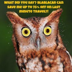 "@Blabla Car's photo: ""#travel #saving #rideshare #owl"""