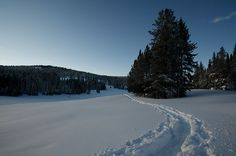 Picture of a snowy landscape off of U.S. Route 191 near West Yellowstone, Montana